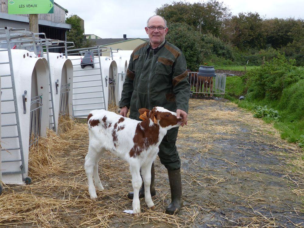 Gilbert posant avec un veau à Keroudy