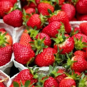 Paniers de fraises
